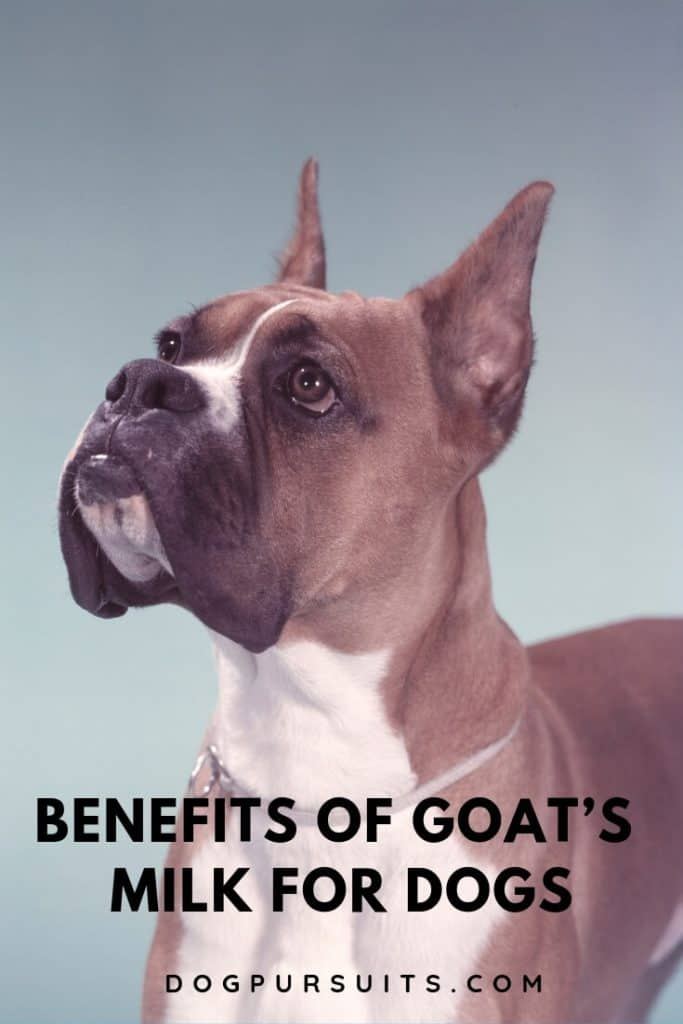 What are the Benefits of Goat's Milk for Dogs