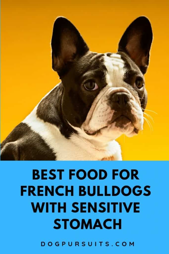 What are the Best Food for French Bulldogs with Sensitive Stomach