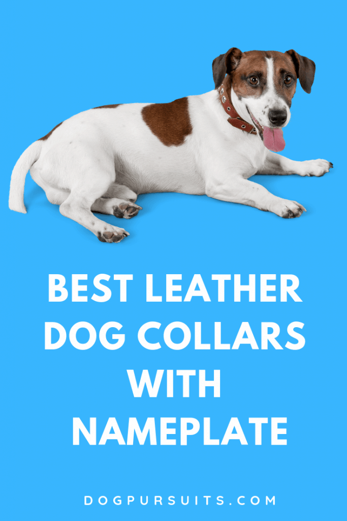Discover the Best Leather Dog Collars with Nameplate