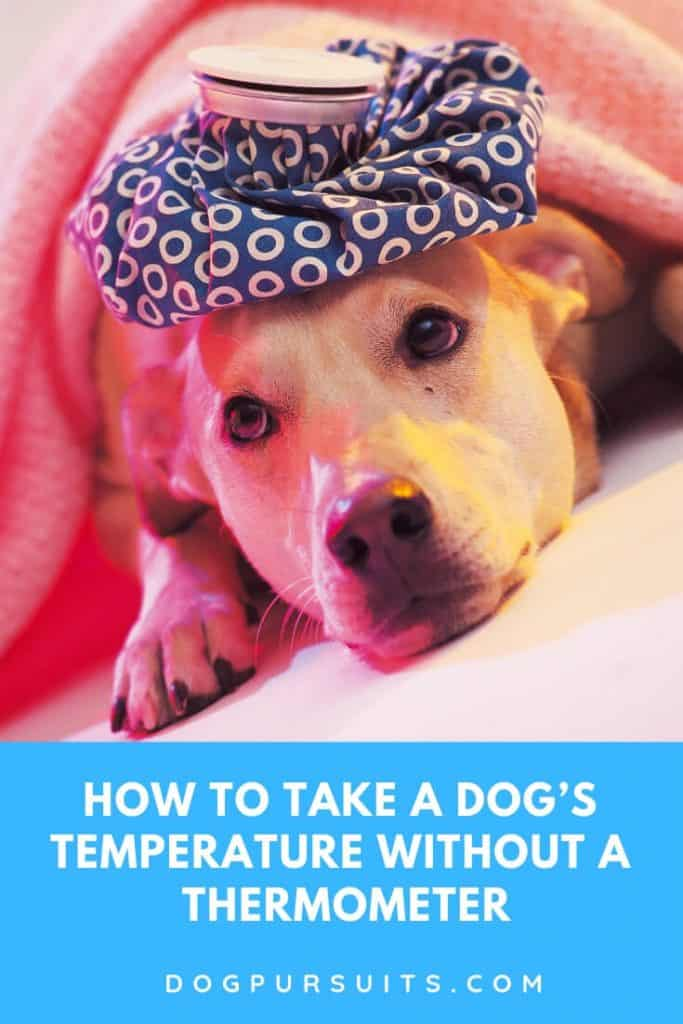 Tips on How to Take a Dog's Temperature Without a Thermometer