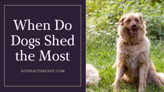 When Do Dogs Shed the Most