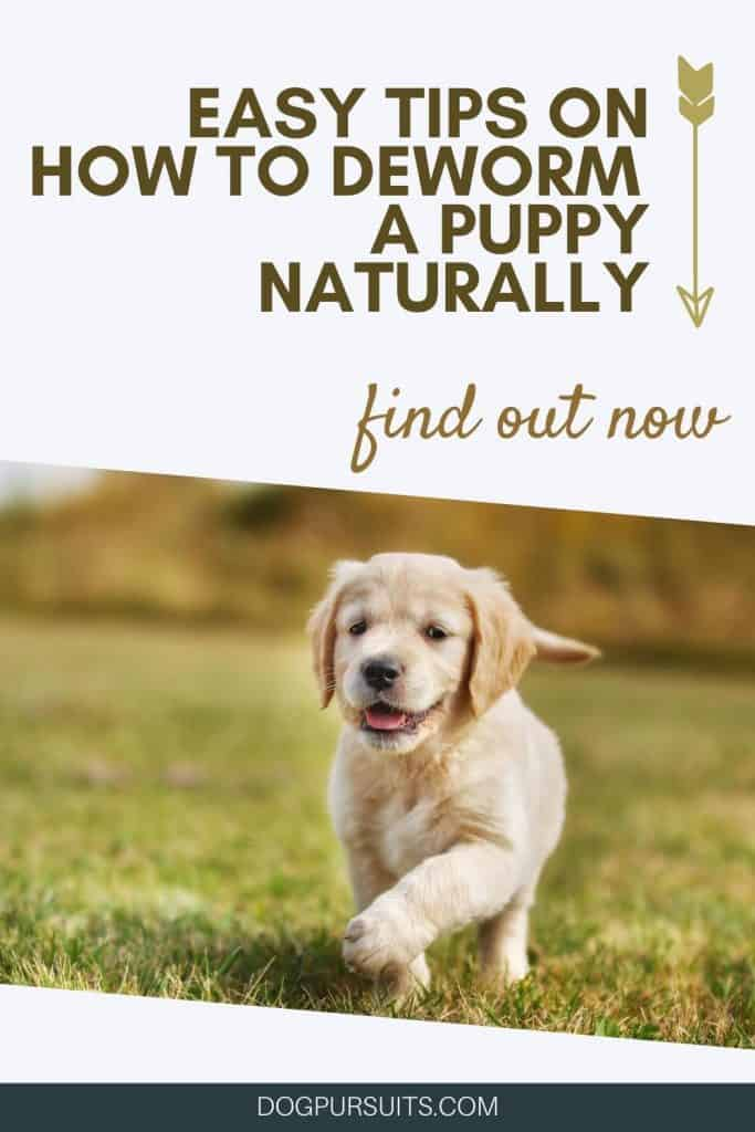 Easy Tips on How to Deworm a Puppy Naturally