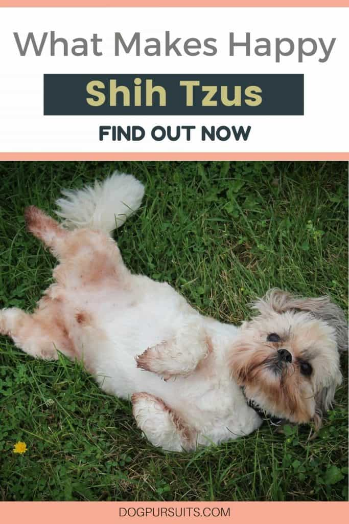 What Do Shih Tzus Like to Do Facts