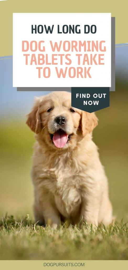 How Long Do Dog Worming Tablets Take to Work Facts