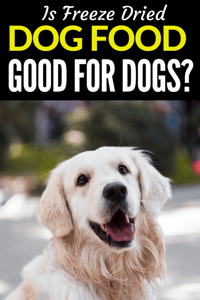Is Freeze Dried Dog Food Good for Dogs? Find Out Now