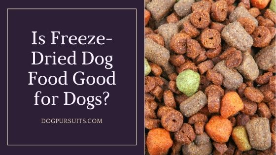 Is Freeze-Dried Dog Food Good for Dogs - Quick Answers