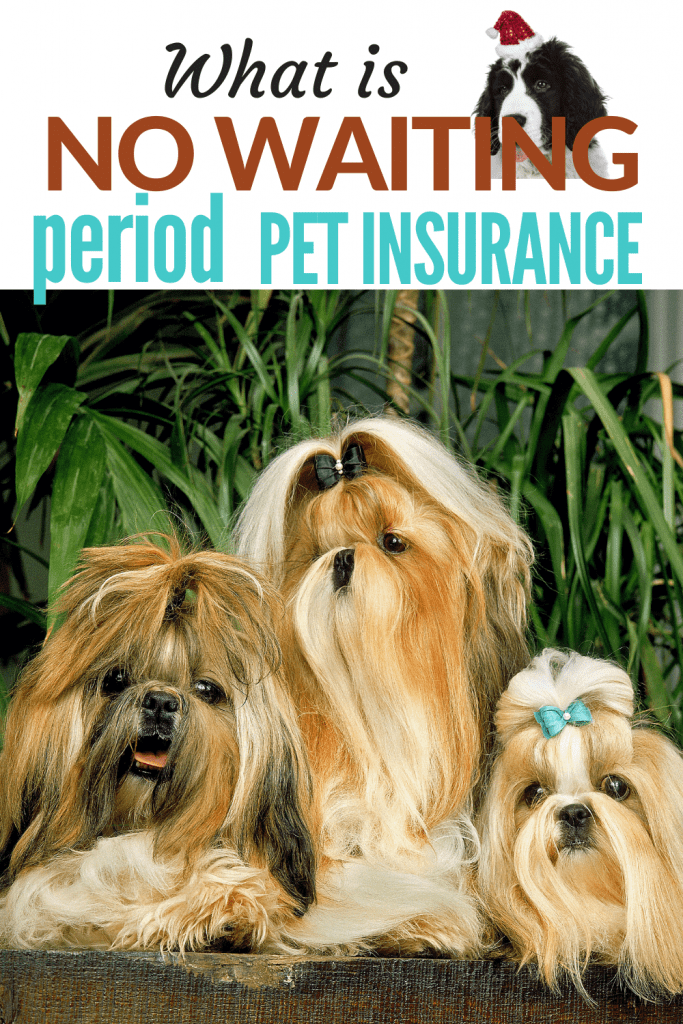 What Is No Waiting Period Pet Insurance