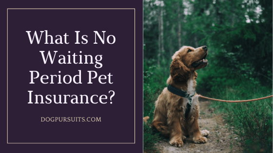 What Is No Waiting Period Pet Insurance Quick Answers